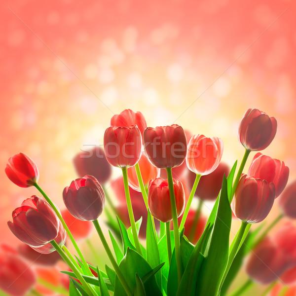 Fantastyczny tulipany wakacje magic świetle piękna Zdjęcia stock © Taiga