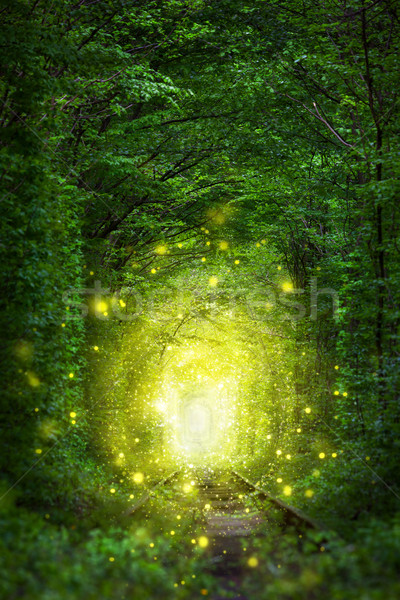 Fantastic Trees Scene - Tunnel of Love with fairy light  Stock photo © Taiga