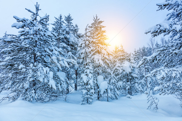 Winter landscape -  frozen trees in forest Stock photo © Taiga