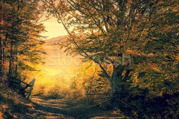 Magic way in Autumn Forest, yellow trees, fall season  Stock photo © Taiga