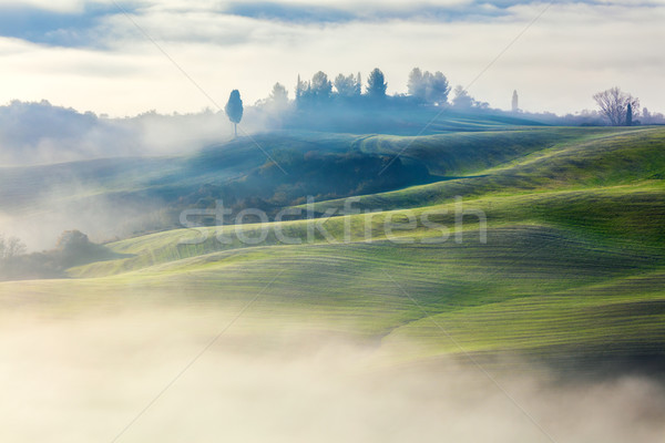 Magically Foggy Valley in the morning landscape Stock photo © Taiga
