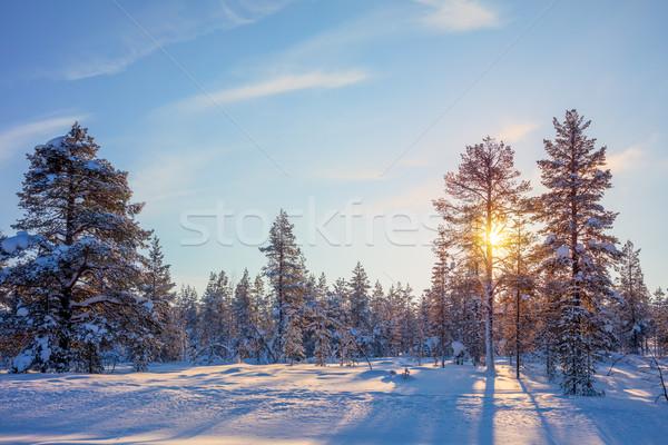 Winter Golden Sundown - northern nature  Stock photo © Taiga