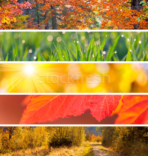 Toplama sonbahar sezon güz soyut renkli arka Stok fotoğraf © Taiga