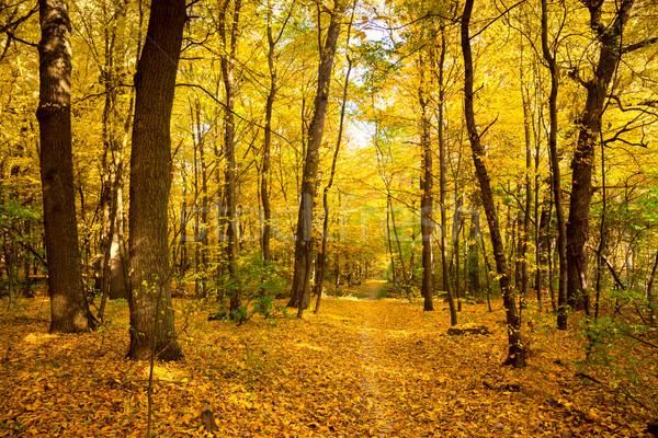Gold Autumn landscape with footpath -  Beautiful Trees, fall sea Stock photo © Taiga