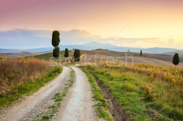 Landscape at sundown time - ground road and beautiful cypresses  Stock photo © Taiga