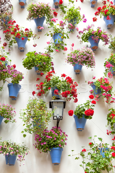 Blue Flowerpots and Red Flowers on a white wall with vintage lan Stock photo © Taiga