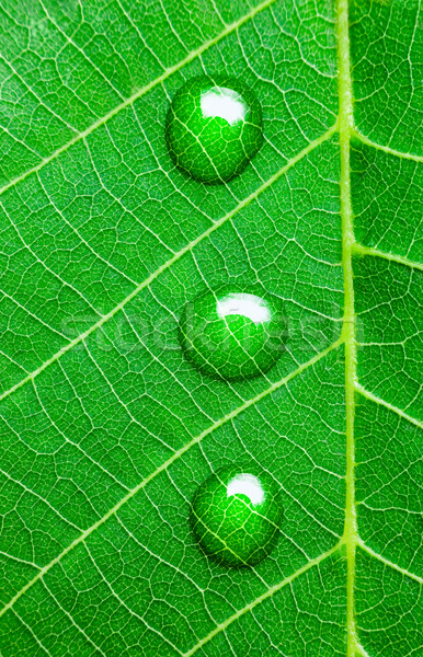 Water Drops on a Green Leaf  / Super Macro Stock photo © Taiga