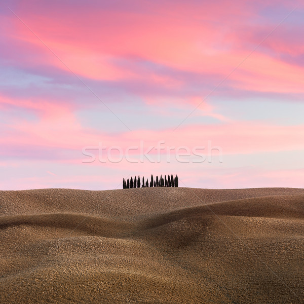 Beautiful Tuscany Landscape with hills and cypresses at sundown  Stock photo © Taiga
