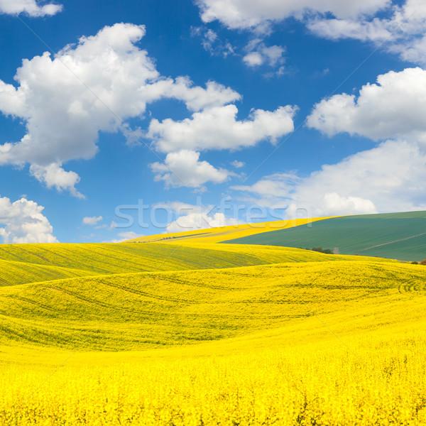 Golven heuvels landschap kleurrijk velden mooie Stockfoto © Taiga