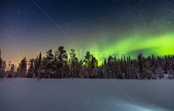 Real Northern lights or Aurora borealis above the snowy  forest Stock photo © Taiga