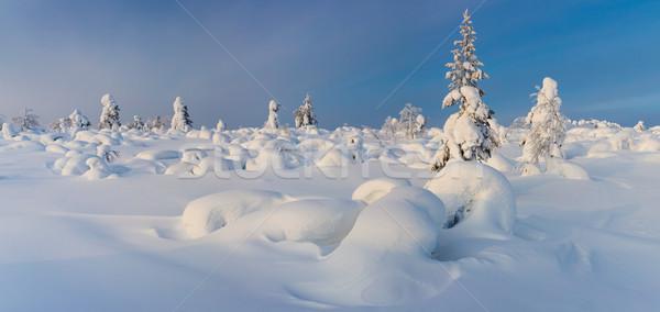 素晴らしい パノラマ 風景 北方 冬 自然 ストックフォト © Taiga