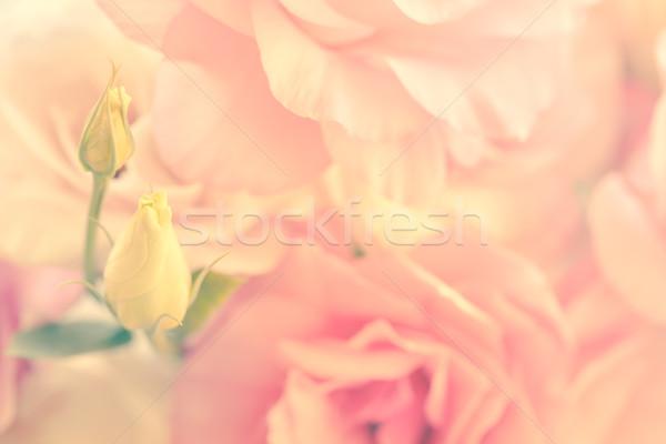 нежный цветы Vintage стиль мягкой Focus Сток-фото © Taiga