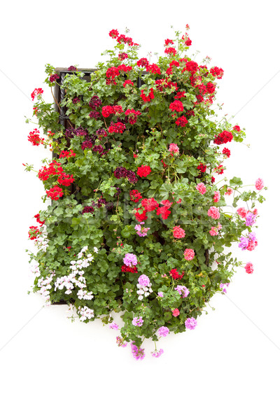 Typical Window decorated Pink and Red Flowers, Spain, Europe Stock photo © Taiga