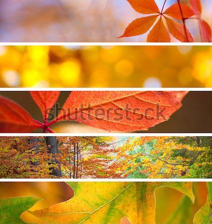 коллекция осень Баннеры Осенний сезон аннотация красочный Сток-фото © Taiga