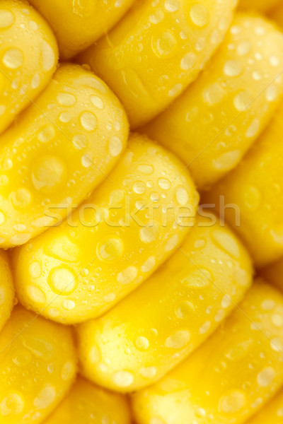 Grains of Ripe Corn with Water Droplets / diagonal / Extreme Mac Stock photo © Taiga