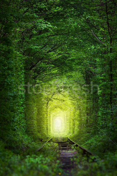 Stock photo: Fantastic Trees - Tunnel of Love with fairy light
