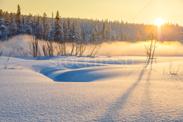 Winter sunset in snowy forest with beautiful misty fog Stock photo © Taiga