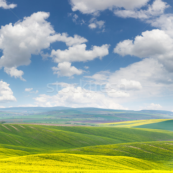 Spring fresh landscape of colorful fields and beautiful hills wi Stock photo © Taiga