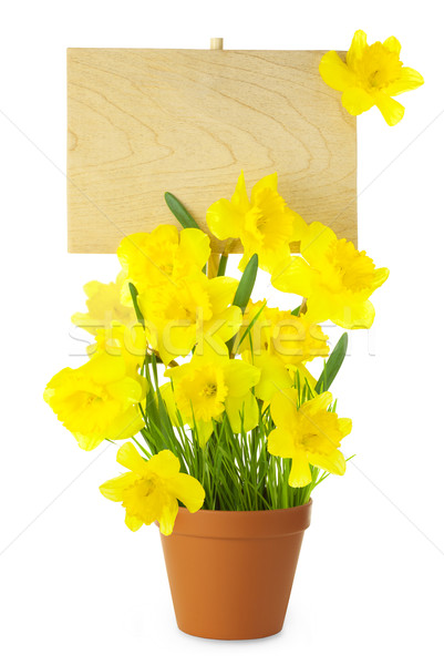 Wood Sign with Daffodil Flowers / empty board for your text /  i Stock photo © Taiga