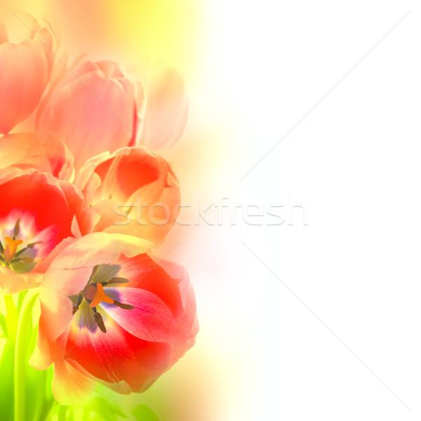 Abstract ontwerp bloemen artistiek stijl mooie Stockfoto © Taiga