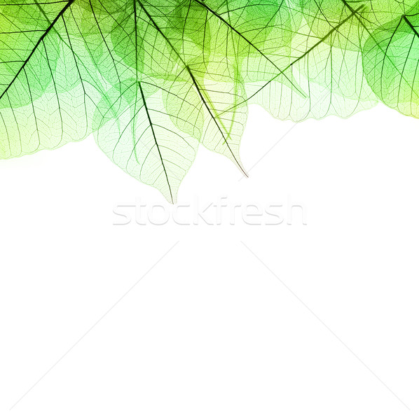 Border of Green transparent Leaves - isolated on white  Stock photo © Taiga
