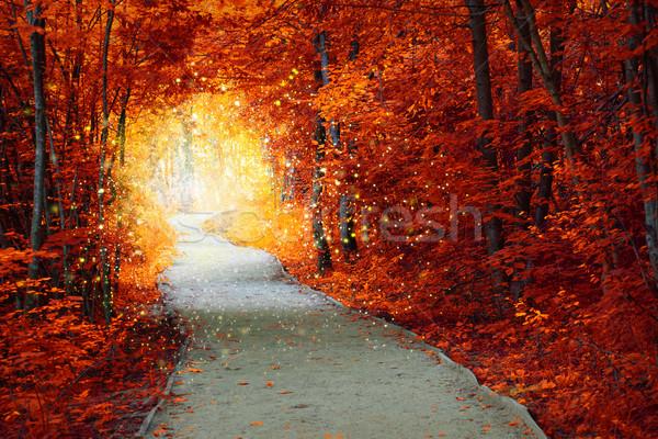 Magiczny jesienią lasu ścieżka fantastyczny poświata Zdjęcia stock © Taiga