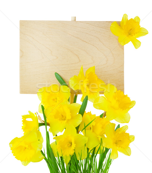 Narcissus ( Daffodil ) and Empty Sign for message / isolated Stock photo © Taiga
