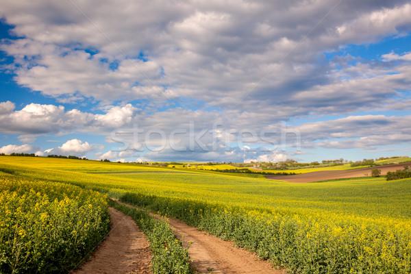 желтый цветения полях землю дороги долины Сток-фото © Taiga