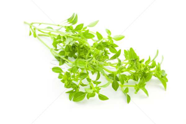 Basilicum Spice kruid witte voedsel natuur Stockfoto © Taiga