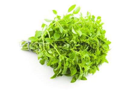 Fres Basil / spice herb on white background Stock photo © Taiga