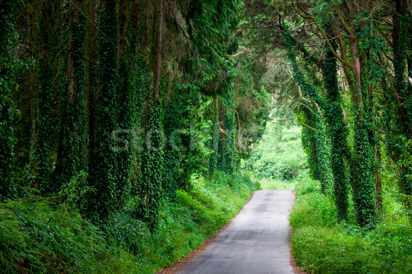 Road in magic dark forest Stock photo © Taiga