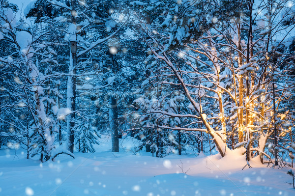 Stock photo: Christmas tree with garland lights and snow in winter forest