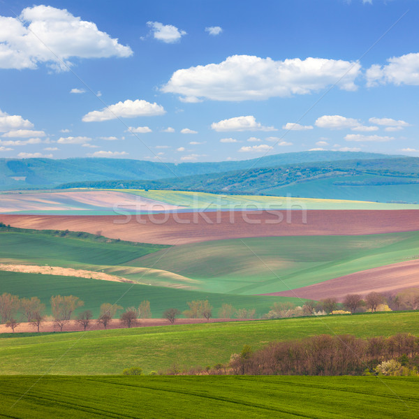 Colorful Landscape of fields in countryside Stock photo © Taiga