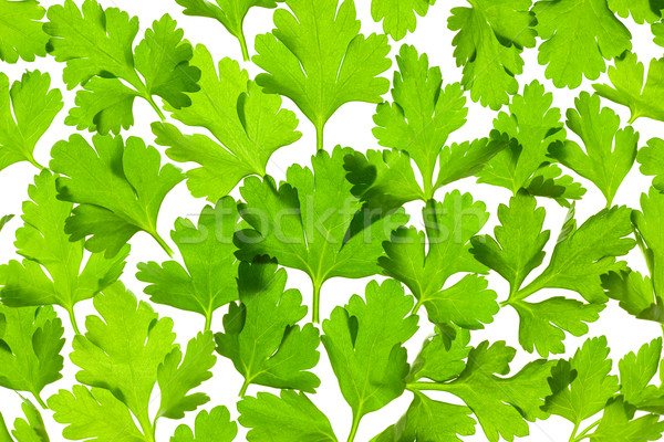 Fresh Parsley close-up background / back-lit Stock photo © Taiga