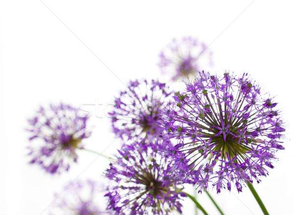 Mooie abstract witte horizontaal bloem ontwerp Stockfoto © Taiga
