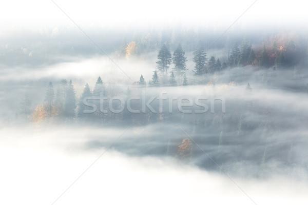 Saison d'automne sauvage forêt sunrise brouillard nuages Photo stock © Taiga