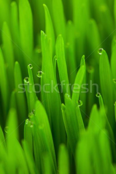 Сток-фото: свежие · весны · зеленая · трава · капли · вертикальный · Эко