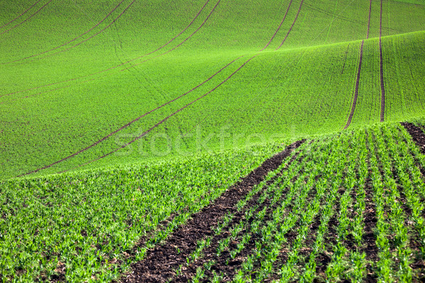 Stock photo: Pastoral green field in beautiful hills, abstract background