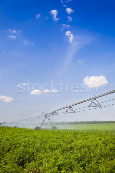 Irrigation in Field / agriculture Stock photo © Taiga
