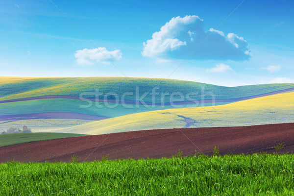 Lanscape of Colorful fields in beautiful striped hills in minim Stock photo © Taiga