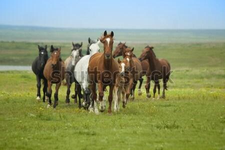 Paarden lopen blauwe hemel groen gras voorjaar zon Stockfoto © Taiga