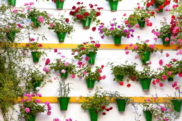 Flower Decoration of  the Wall - Old European Town, Cordoba, Spa Stock photo © Taiga