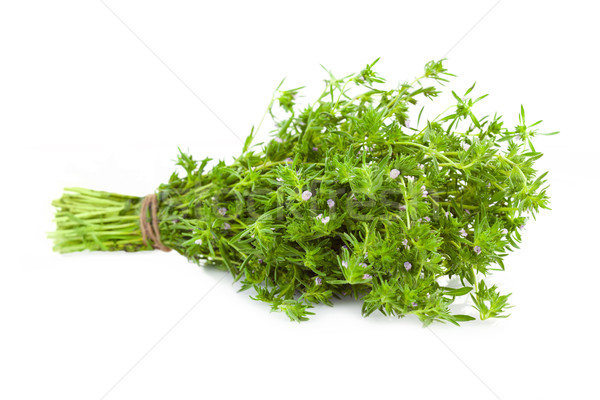 Bunch of fresh Thyme /  isolated on white  Stock photo © Taiga