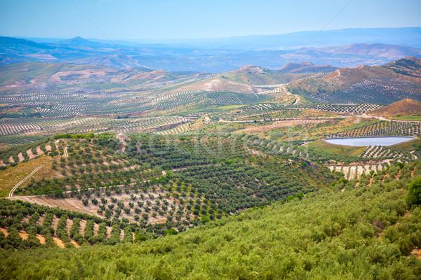 Olive Trees Plantation, Beautiful Andalusian landscape Stock photo © Taiga