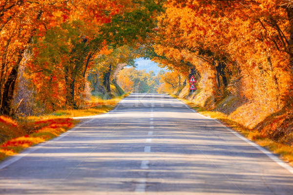 Autumn Fall Road landscape - Real trees tunne Stock photo © Taiga