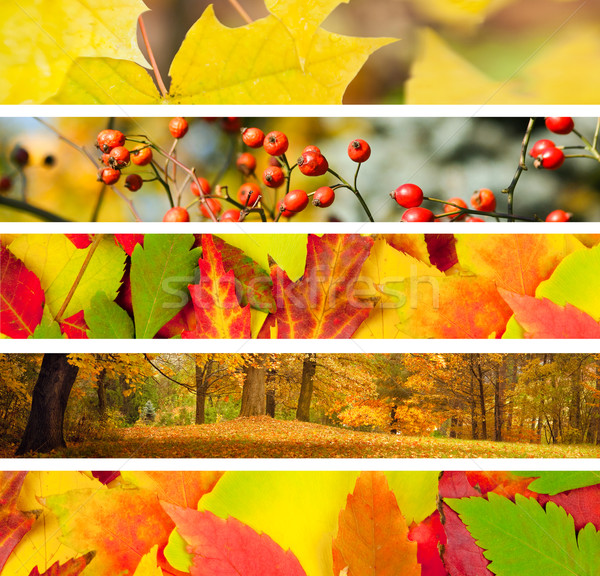 Set of 5 Different Autumn's Banners Stock photo © Taiga