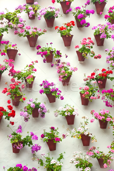Stock photo: Flowerpots and colorful flower on a white wall,  Old European to