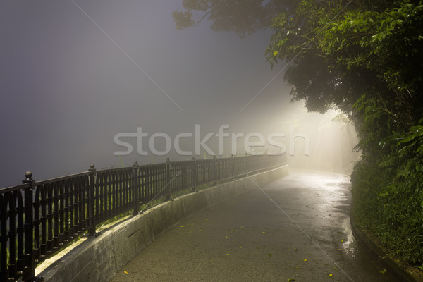Mystery Fog in the dark park with way to light Stock photo © Taiga