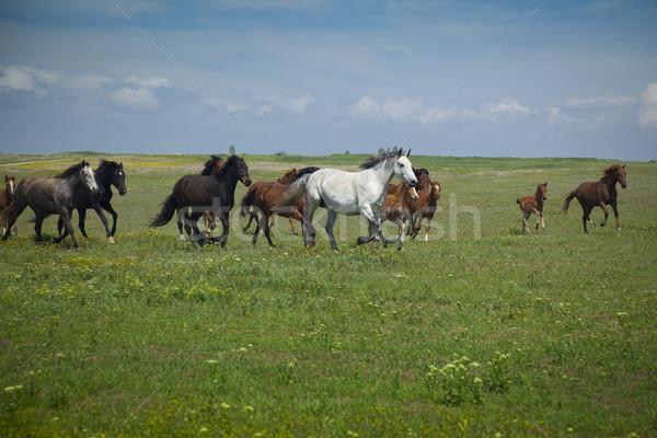 Stockfoto: Paarden · lopen · blauwe · hemel · groen · gras · voorjaar · zon