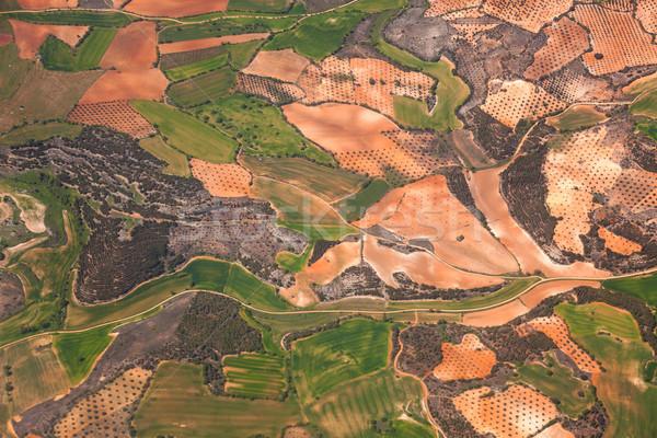 Luchtfoto landelijk groene velden olijfolie bomen Stockfoto © Taiga